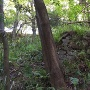 本丸倉屋敷郭の石垣