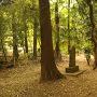 立木之地蔵尊