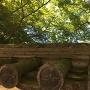 紅葉渓庭園の土塀の瓦と新緑