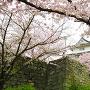 丸亀城桜まつり2017