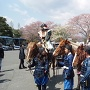 岡城桜まつり 2014
