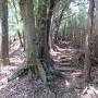 誓願寺側の登山道