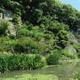 庭園のような内堀
