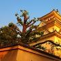 西陽に染まる大垣城