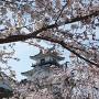 桜の向こうに天守