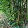 竹藪の中の土塁