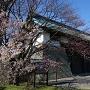 桜開花宣言した日の松前城桜_2