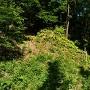 畝状竪堀群を下方から