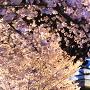 西の丸庭園からのブルーライトアップ