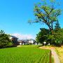 井川城址風景