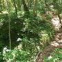 本丸跡から松岳山城に行く途中の空堀2