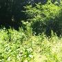 天神山城と松岳山城の境界にある標柱
