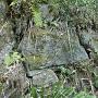 山の中腹あたりで見つけた石垣跡