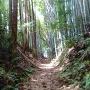 竹林の中を行きます
