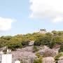 桜の小牧山[提供:小牧市]