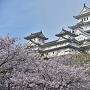 桜の季節 白鷺城雄姿