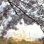 桜の先に見える