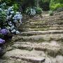 石段と紫陽花