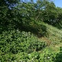 本丸土塁と堀(南側)