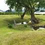 お庭の泉水と樹齢350年の柳の木