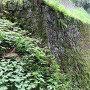 本丸石垣(二の丸側から)