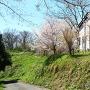 御殿上に咲く桜と管理棟
