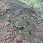 本丸(石碑)裏に残る石垣