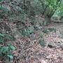 登城路途中の石垣1