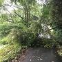 車道を遮る倒木