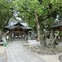 白山神社と楠