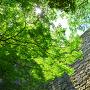 木陰で見上げる高石垣