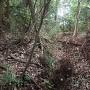 城址東森林の空堀らしきもの