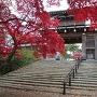 表門と楓の紅葉
