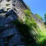 松山城 揚木戸門跡付近の本丸石垣
