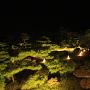 高松城 飛雲閣庭園ライトアップ