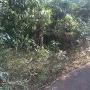 堀と土塁遺構