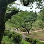 大倉山公園(梅林エリア)