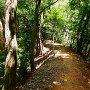 登城路途中の一騎駆けのような風景