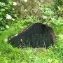 愛姫生誕の碑