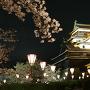 夜桜と天守