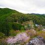 物見岩からの眺め(春)