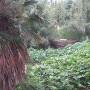 崖下の風景