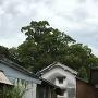 村田邸の蔵と陶器城址の楠