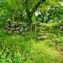 天守台 夏草の風景