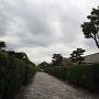 御城番屋敷のおい越しの松