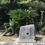 駿府城から移植された蘇鉄
