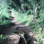 賤機山城跡への道のり