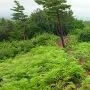 本丸跡から登城道の方向を見る