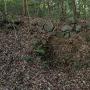 杉の木井戸(二の丸)