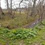 正面の土塁と水堀
